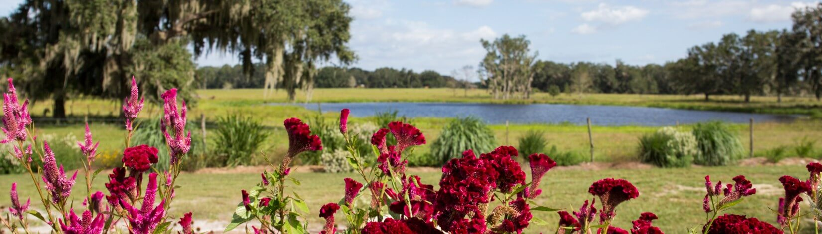 red flowers in foreground with background view of lake and trees